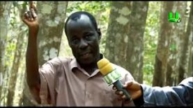 AYEKOO-Rubber-Plantation-in-Ghana-PART-2-attachment